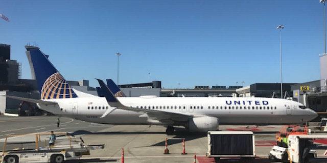 United Airlines ancora sotto accusa: obbliga il cane a viaggiare nella cappelliera dell'aereo e il cucciolo muore