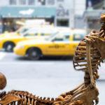 Il museo del sesso di New York cerca personale: ecco come candidarsi