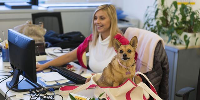 cane ufficio