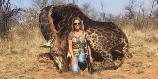 giraffa-nera