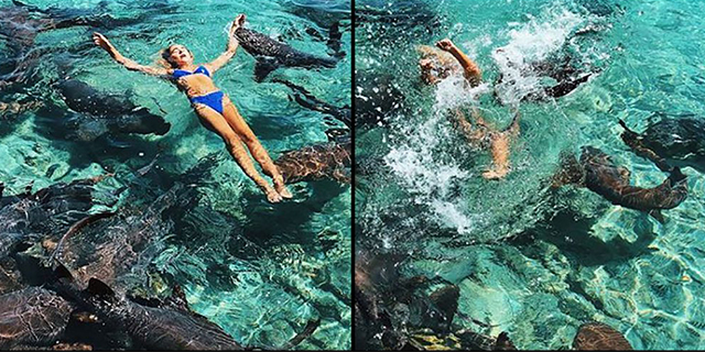 Influencer morsa da uno squalo: stava tentando lo scatto perfetto