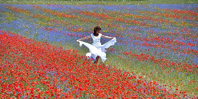 La bellezza mozzafiato della fioritura delle lenticchie in Italia