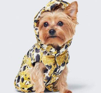 H&M e Moschino, arriva la linea per gli animali