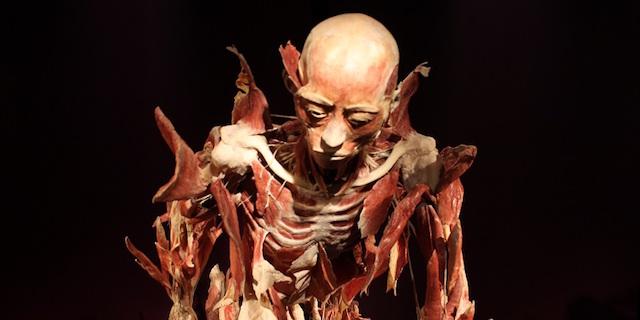 Real Bodies: 50 cadaveri reali (e 450 organi umani) in mostra a Milano
