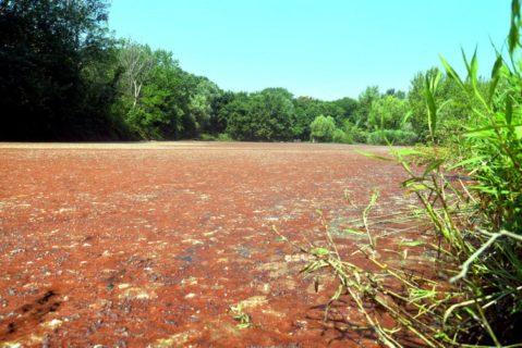 Da Milano a Rimini, perché l'acqua diventa rossa: i rischi o meno dell'alga