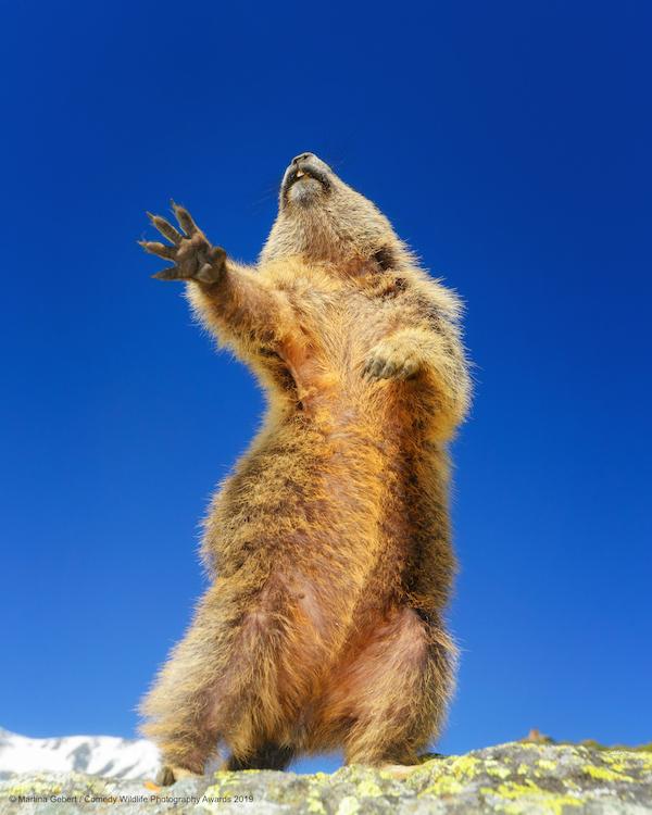 Animali che fanno ridere: 20 facce che non pensavate potessero fare