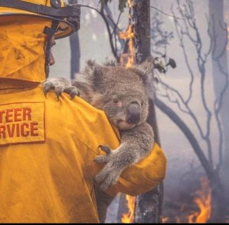 L'Australia che brucia in 14 immagini e nell'addio della piccola Charlotte a papà