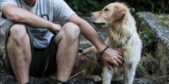 Coronavirus: posso portare a spasso il cane o rischio la multa?