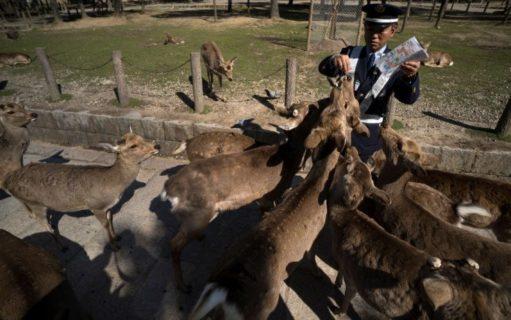 Gli effetti ambientali del Coronavirus: scimmie, anatre e lepri ripopolano le città