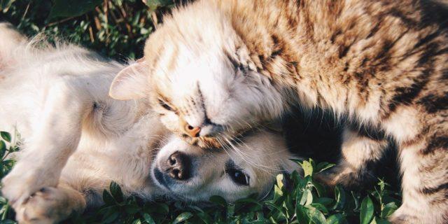 """Fase 2, la LAV: """"Bonus e aiuti per chi ha animali domestici o li adotta"""""""