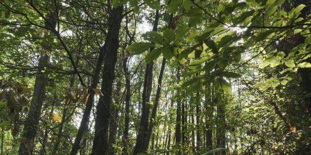 A Firenze un albero piantato per ogni vittima del COVID-19