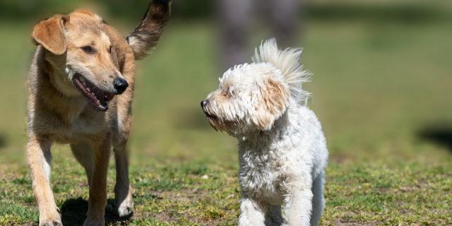 Adesso è ufficiale: la Cina vieta la vendita di carne di cane