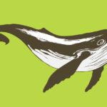 Perché su Tik Tok tutti stanno cantando una Sea Shanty, una canzone da baleniera