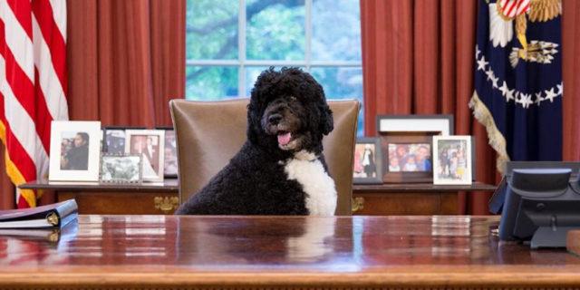 I toccanti messaggi di addio della famiglia Obama per l'adorato cane Bo