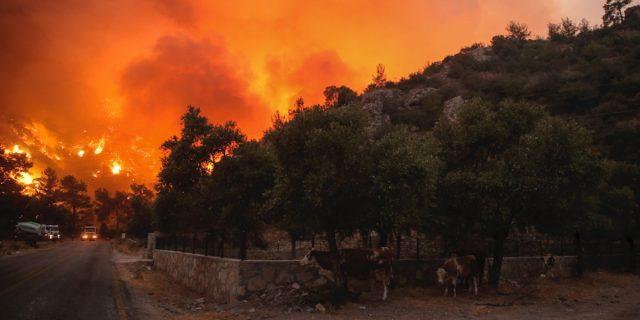 Dalla Sardegna alla Grecia: il Mediterraneo è in fiamme