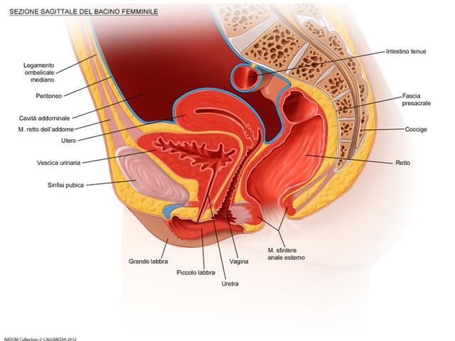 perineo e pavimento pelvico