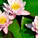 Sesso o yoga? Con la posizione del loto il piacere diventa relax