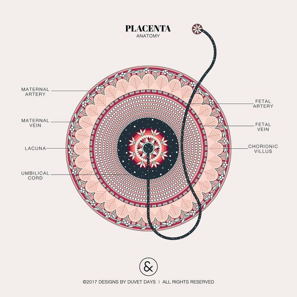 10 immagini di anatomia femminile per superare la violenza sessuale