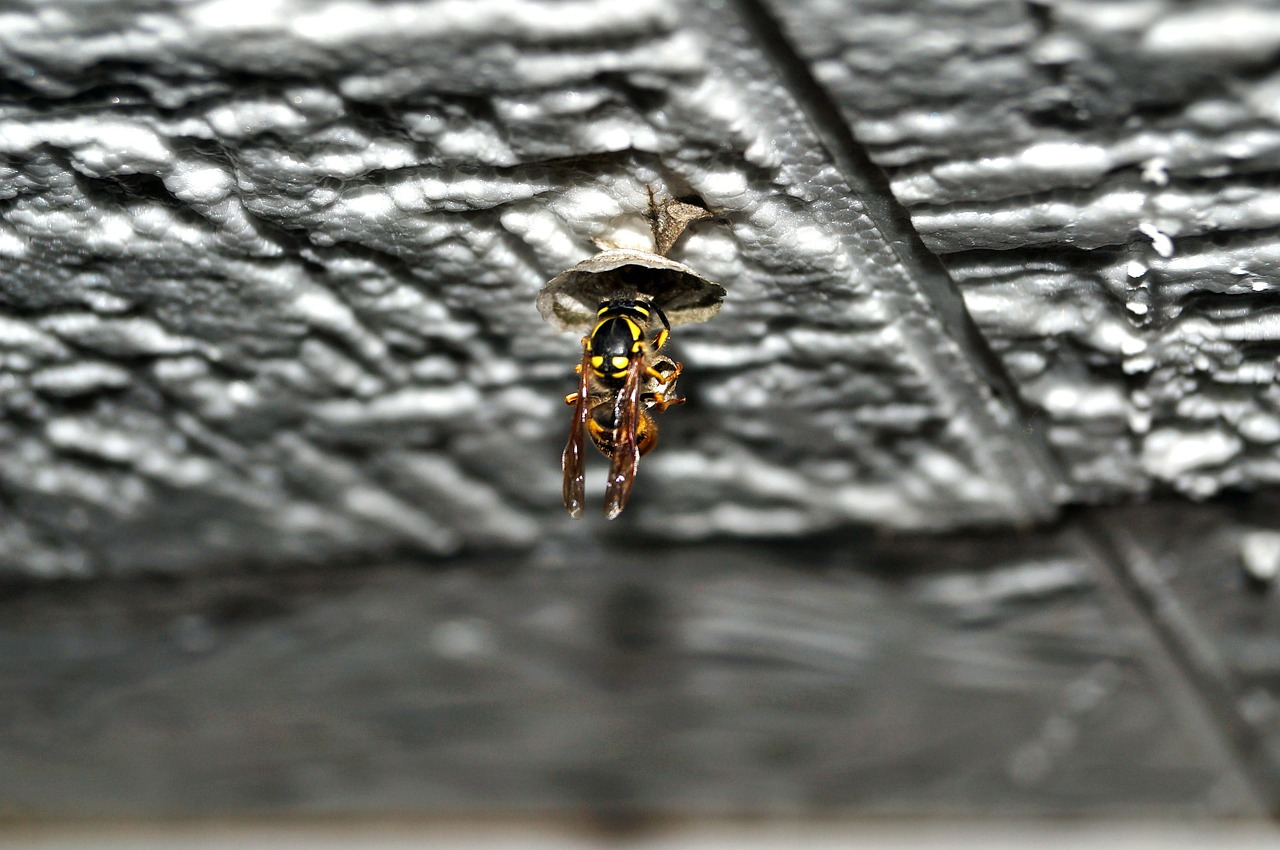 Trend pericolosi: perché alcune donne stanno inserendo in vagina dei nidi di vespa