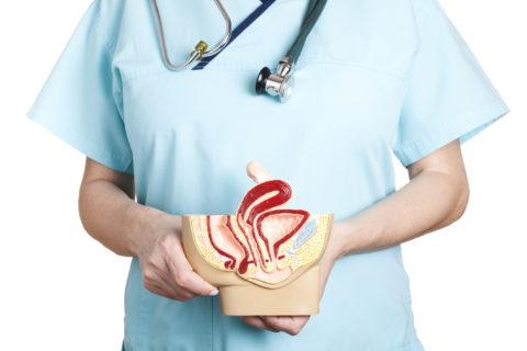 Basta confusione: vagina e vulva non sono la stessa cosa