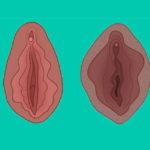 Cosa vedremo nel primo Museo della Vagina?