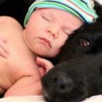 Neonati e animali: è pericolosa la convivenza?