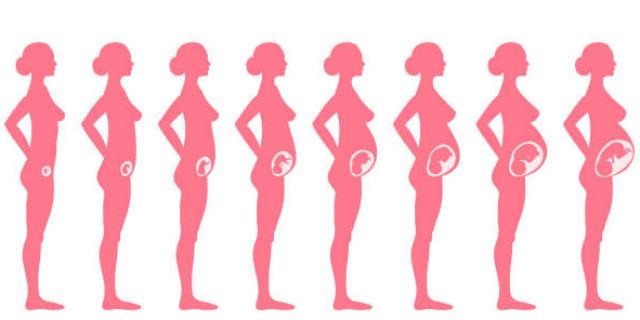 seno in gravidanza mese per mese