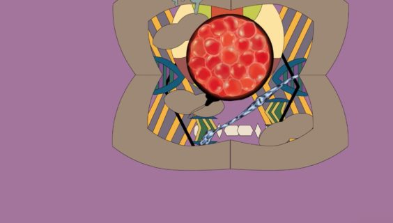 La lotta della placenta per dire che il feto non è un corpo estraneo da eliminare