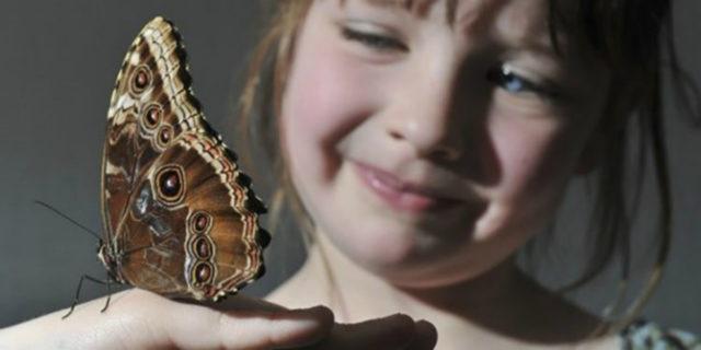 Chi sono i bambini farfalla e perché è importante parlare dell'Epidermolisi Bollosa