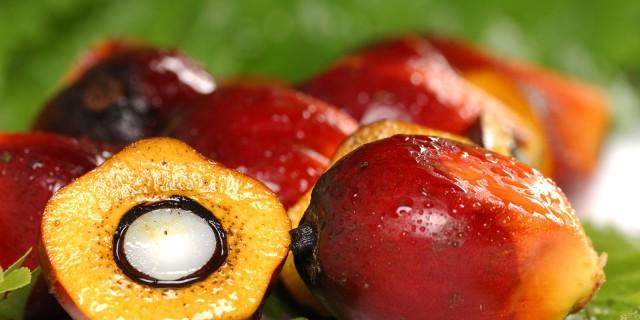 Olio di Palma, Salute e Ambiente: Tutta la Verità