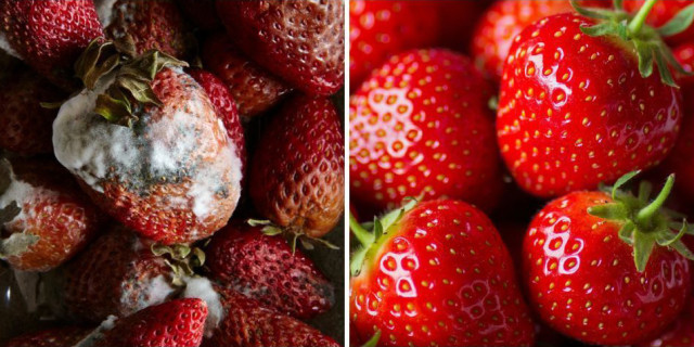 11 Semplici Trucchi per Conservare Frutta e Verdura a Lungo