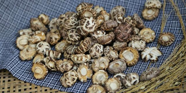 Shiitake: proprietà e controindicazioni dei funghi medicamentosi