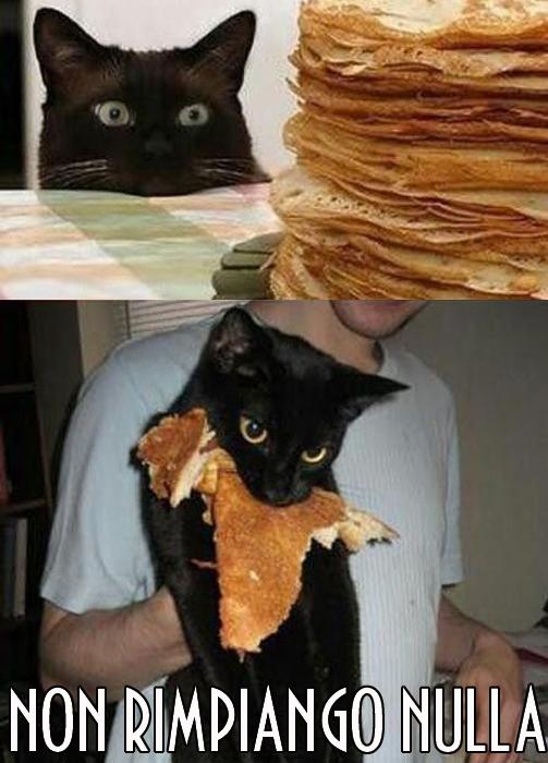 Gatto pancakes