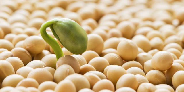 5 Motivi Per Mangiare La Soia Tutti I Giorni (Ma Senza Esagerare!)