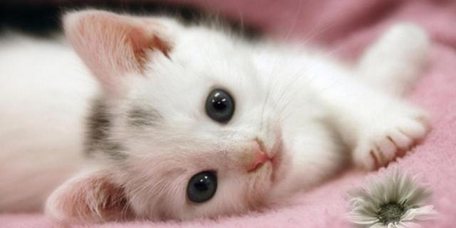 Scienza e Medicina: I Gatti Potranno Curare Le Nostre Malattie