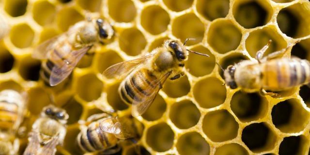 Puntura di ape sintomi