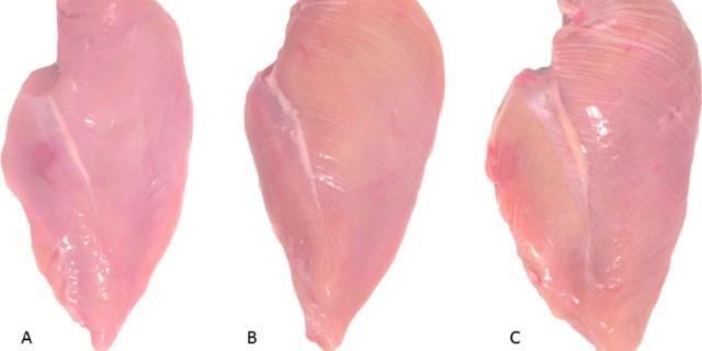Perché dovreste fare attenzione a cosa dice questa riga bianca sul pollo