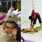 Doga (o Dog Yoga) e Goat Yoga: perché fare yoga con il cane o... la capra