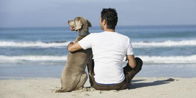Leishmaniosi: sapevate che non colpisce solo i cani, ma anche noi?