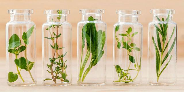L'olio 31, il benessere arriva dalle erbe
