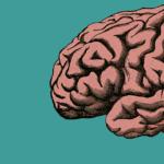 Perché il cervello delle donne è 4 anni più giovane di quello degli uomini