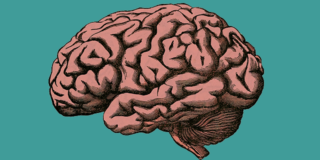 Cervello delle donne