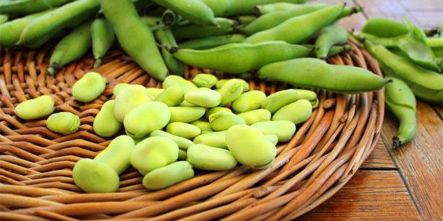 Favismo: perché alcune persone non possono mangiare le fave