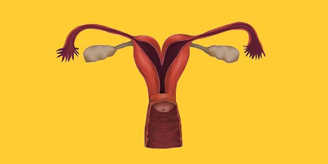 """Utero bicorne: l'utero """"a cuore"""" che preoccupa chi cerca una gravidanza"""