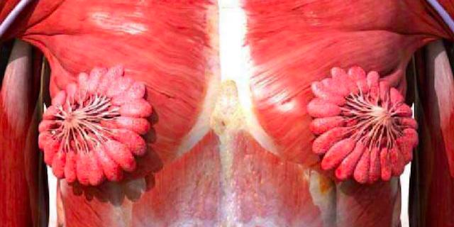 Perché l'immagine dei muscoli del seno è diventata virale