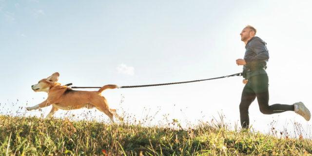 Dog sport, come si pratica e i benefici dell'allenamento che piace ai vip