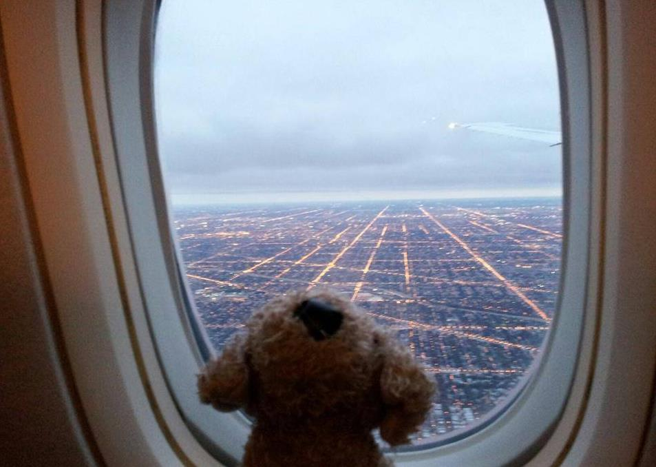 Pocker, Il DogTrotter Che Promuove I Canili In Viaggio Per Il Mondo