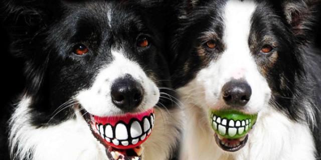 Le 43 migliori invenzioni per cani