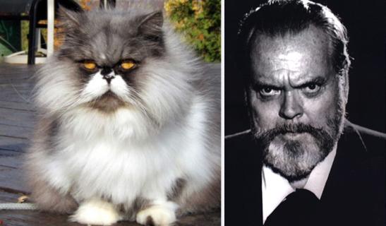 43 Buffi Gatti che Assomigliano a Qualcuno... o a Qualcosa!