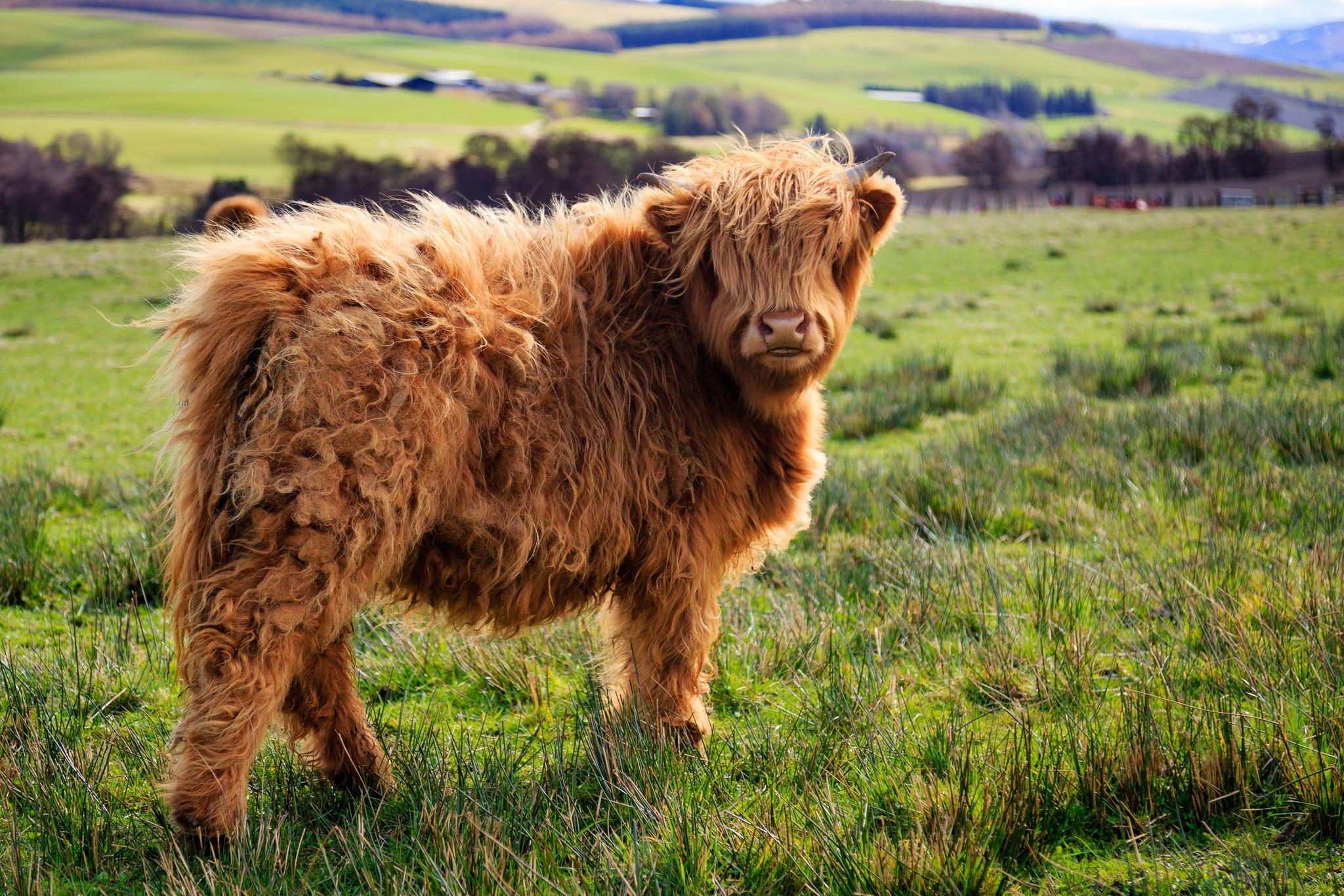 30+ Animali Con Un'Acconciatura Fantastica